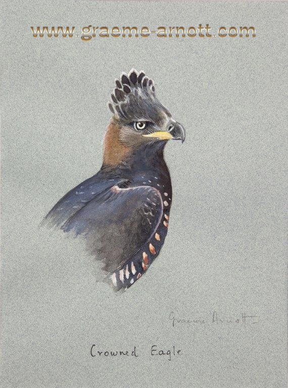 bird paintings for sale crowned eagle portrait